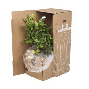 Plant bestellen